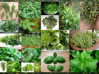 Βότανα - Αρωματικά φυτά