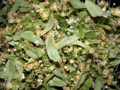 Τίλιο ανθός και φύλλα χύμα 40γρ